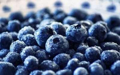 Take Advantage of Blueberry Season – Make Ze's Pancakes